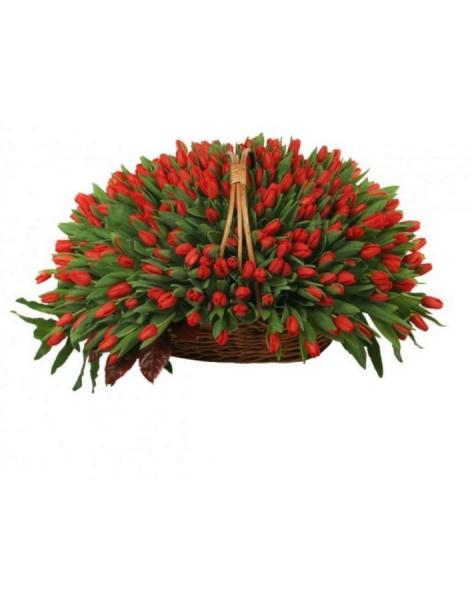 Basket 501 red tulips: delivery of flowers in