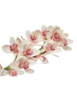 Bouquet of orchids on a branch | Orchids flowers