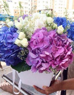 Bouquet of hydrangea | Purple flowers