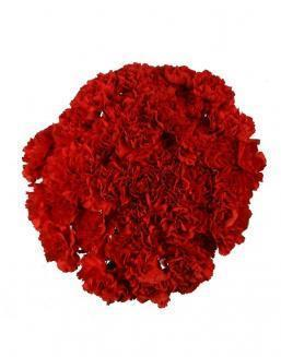 Bouquet of 51 red dianthus | Flowers for Birthday flowers