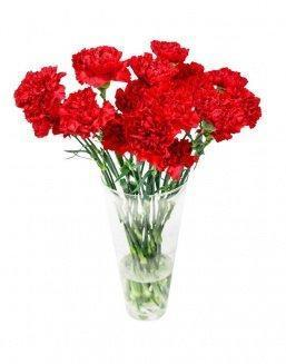 Bouquet of 15 red dianthus | Flowers flowers