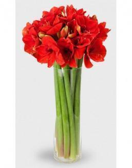 Bouquet of 15 red amariliss | Flowers for Holiday flowers