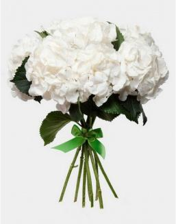 Bouquet of 25 white hydrangeas | Hydrangeas