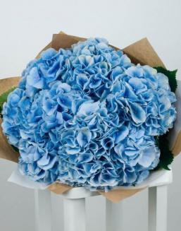Bouquet of 51 blue hydrangeas | Hydrangeas