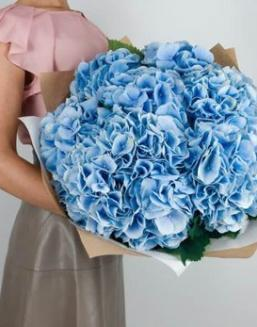 Bouquet of 25 blue hydrangeas | Hydrangeas