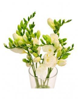 Bouquet of white freesia | Flowers flowers