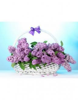 Bouquet of 15 violet lilac | Purple flowers