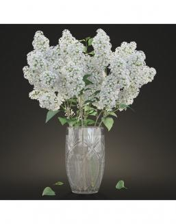 Bouquet of 51 white lilacs | Lilacs flowers