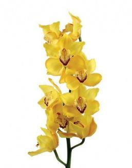 Bouquet of an orchid yellow | Yellow flowers flowers