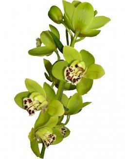 Bouquet of an orchid green | Flowers for Housewarming