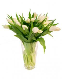 Bouquet of 25 white tulips | Flowers for Housewarming
