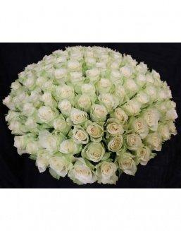 Bouquet of 101 white holland roses | Flowers to mother flowers