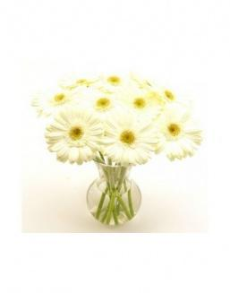 Bouquet of 15 white gerberas | Flowers for Birthday flowers