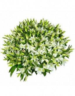 Bouquet of51 white lilies | Flowers to beloved