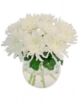 Bouquet of 15 white asters | Flowers to father